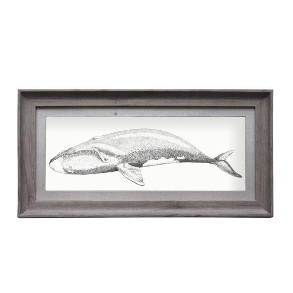 e170032-right-whale