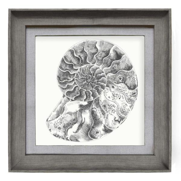 e170046-ammonite
